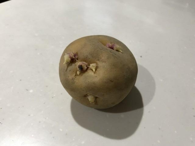 【食品メーカー】芽が出たじゃがいもを何かに使えませんか?